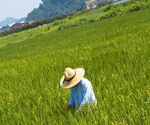 田舎の農作業風景