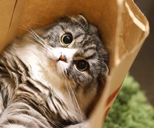 紙袋に収まった猫