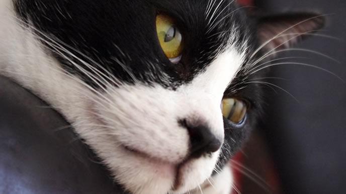 過去の自分を思い出している猫