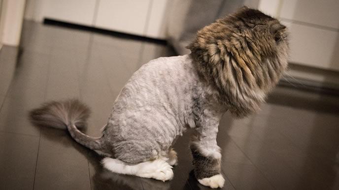 転職を考えている猫