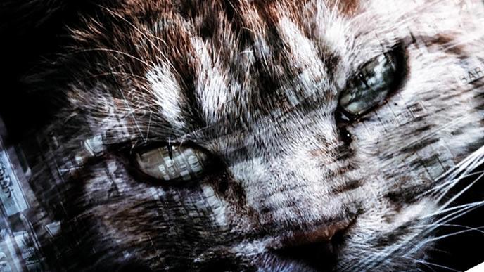 自分が誰なのかわからない猫