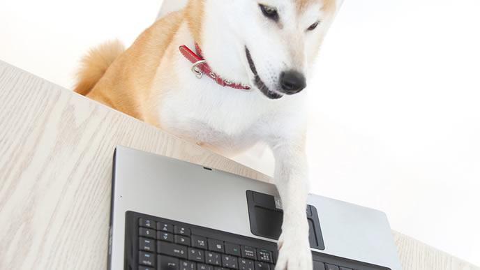 SNSで情報収集をする柴犬