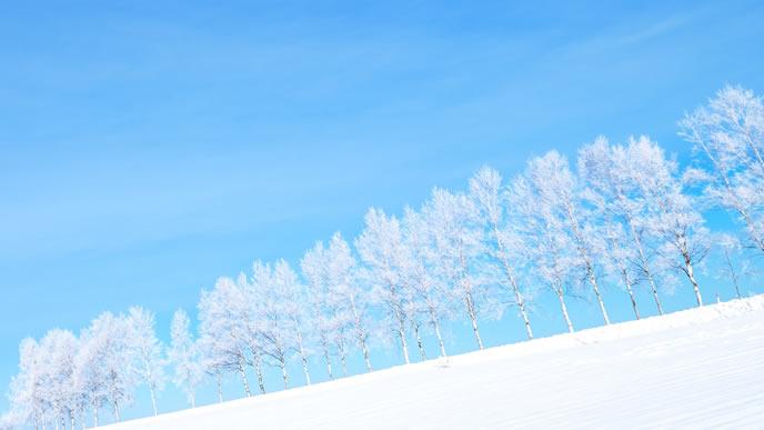 冬の大雪原と雪に覆われた木