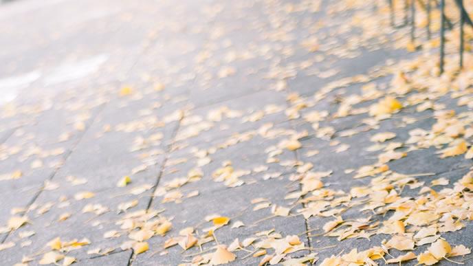道端に広がる紅葉した落ち葉