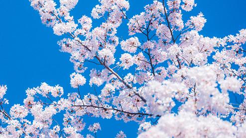 4月の時候の挨拶は?季節を感じる上旬・中旬・下旬の文例