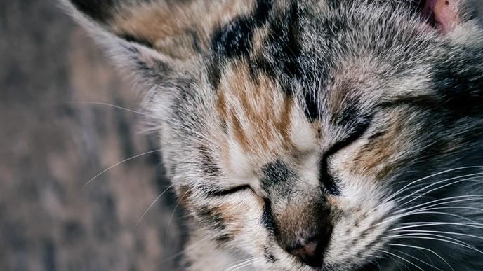 疲れて一息つく猫