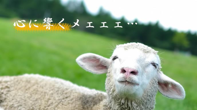 名言に感動する羊