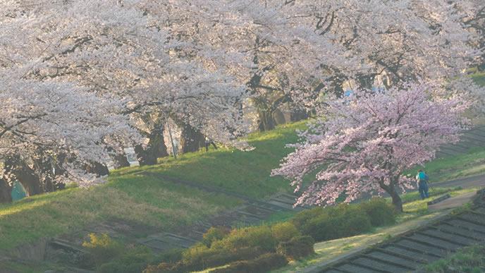 桜が満開になる時期