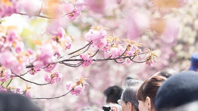 花を見るために訪れた観光客