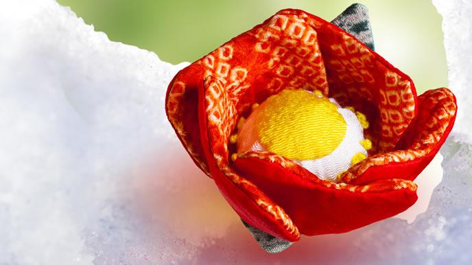 雪解けに咲く花のイメージ
