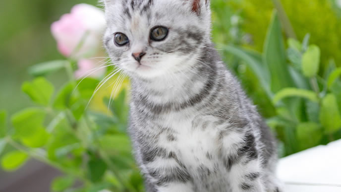 春の臭いを感じる子猫