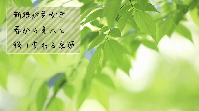 新緑が芽吹いた木