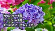 161227_jiko-june2