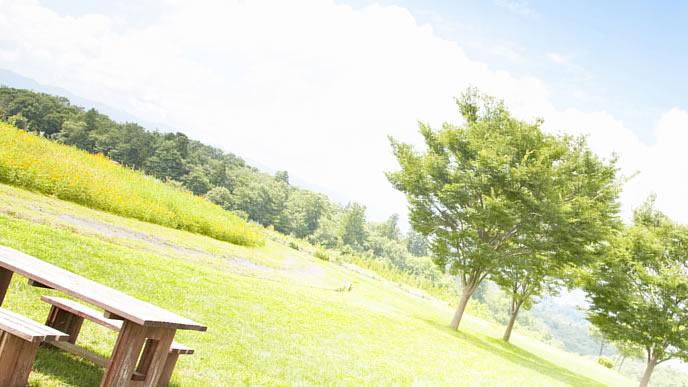 初夏の公園の風景