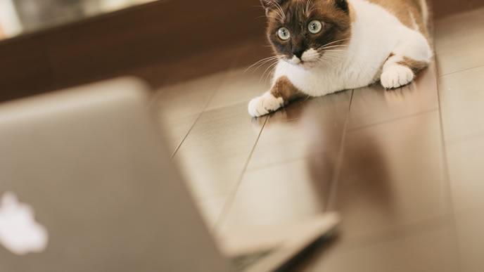 自分の仕事を見直すやる気のある猫