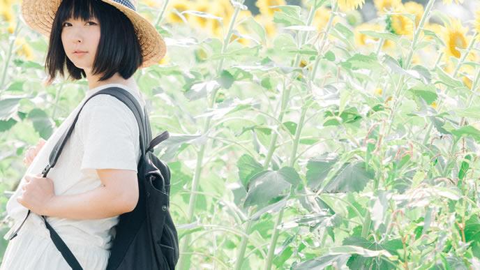 夏のひまわり畑を歩く女の子