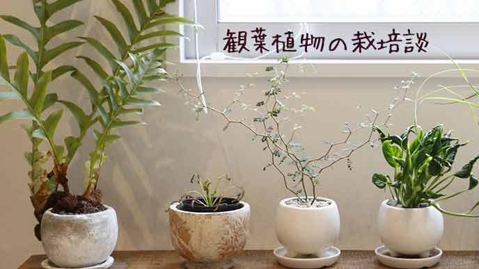 観葉植物が並ぶ部屋