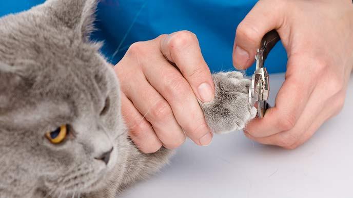 猫の爪を切るトリマー