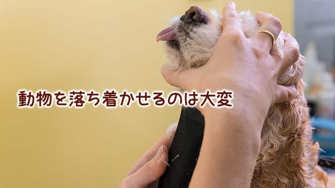 犬の頭を押さえて落ち着かせるトリマー