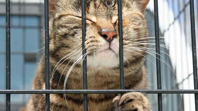 ゲージに入れられた猫