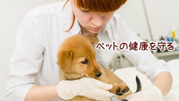 子犬の爪を切るトリマー