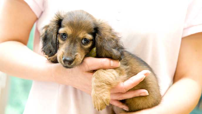 ペットショップ店員に抱っこしてもらっている犬