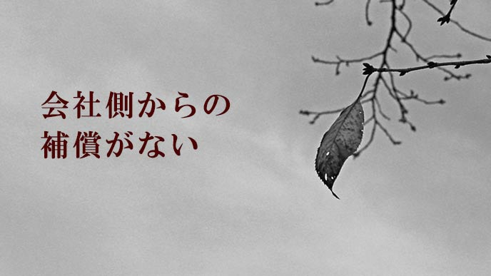 木の枝に残る葉