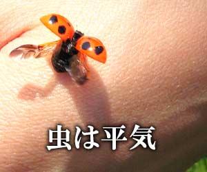 手の甲のてんとう虫