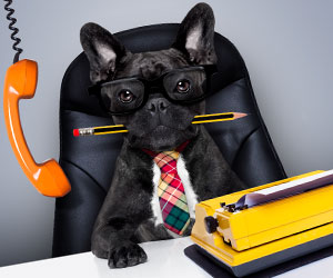 仕事をする犬