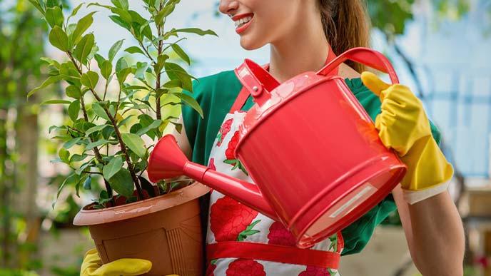 植木に水をやっているエプロン姿の女性