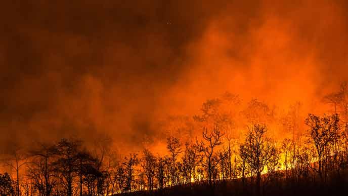 赤く燃え上がる森林