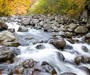 川の流れる水音